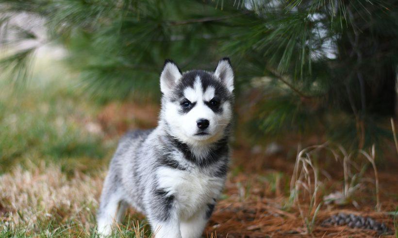 ¿Qué necesito comprar a la hora de adoptar un perro?