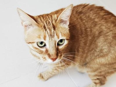 El gatito Bernie. Adoptado en Zarpas y Colmillos