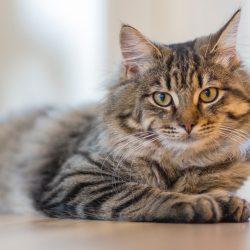 Diarrea en gatos – Causas y tratamiento