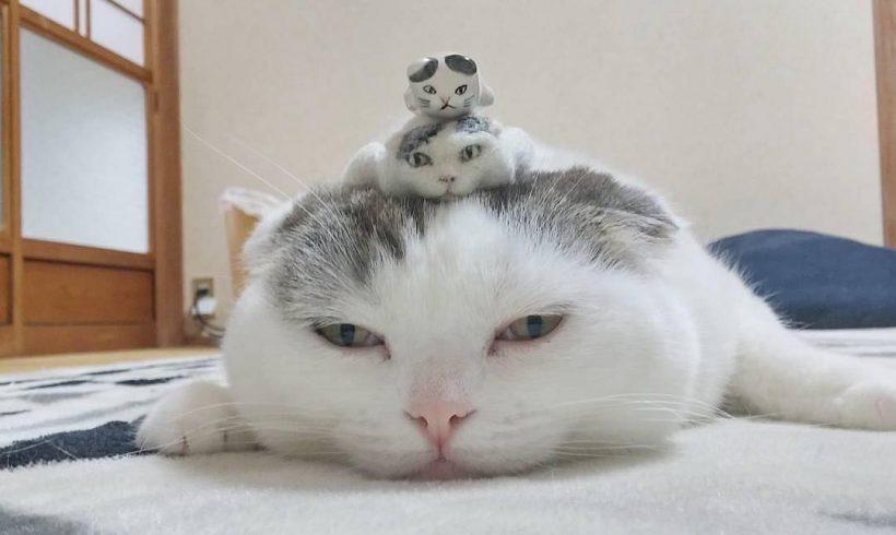 Cuentas de Instagram que deberías seguir… ¡si te gustan los gatos!