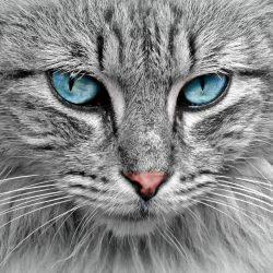 Herpesvirus felino – Síntomas, tratamiento y prevención