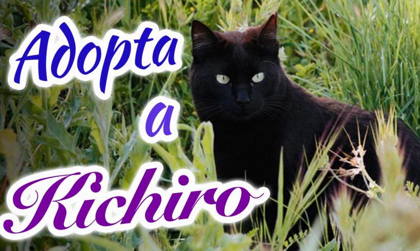 Kichiro, un ejemplo de superación