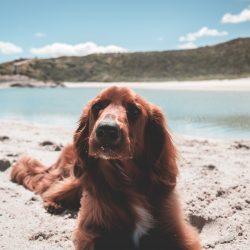 Playas para ir con tu perro este verano. Parte I