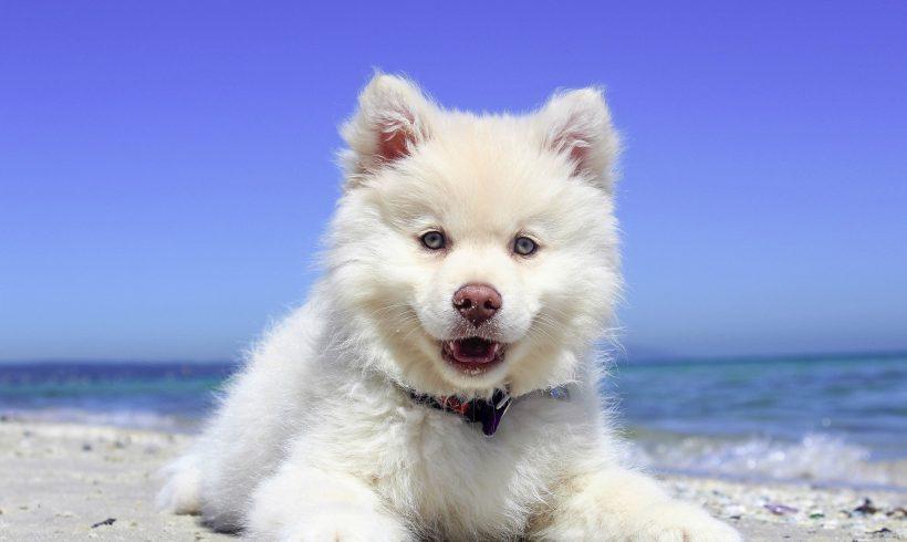 Playas para ir con tu perro este verano. Parte III