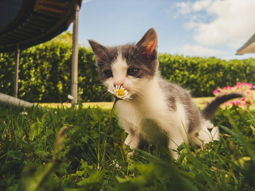 ¿Sabes qué es el asma felina?