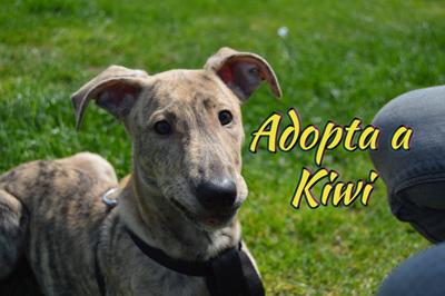 Kiwi, último cachorrito de una camada abandonada por encontrar su final feliz